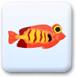 小鱼吃泡泡