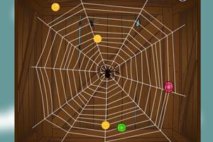 蜘蛛的生存