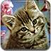 可爱猫咪宝贝